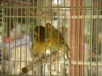 tn_oiseaux